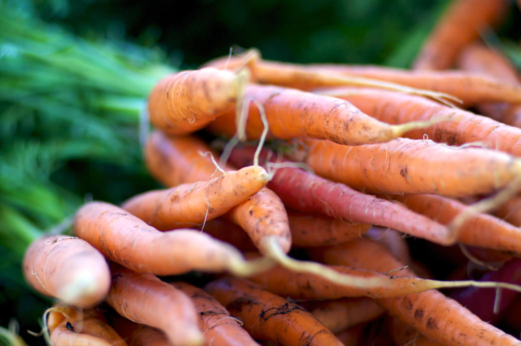 20170215_Colorado_Organic Carrots
